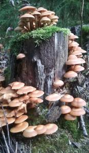 Sienet kannossa2