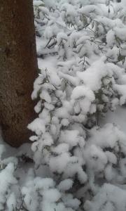 Lumisia varpuja
